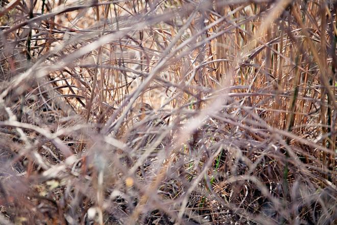 quailhuntingnc