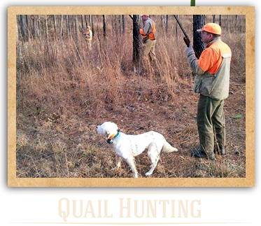 Quail Hunting in NC